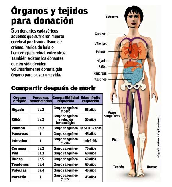 Mitos y realidades sobre los transplantes de órganos