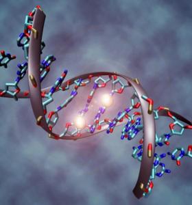 Científicos logran describir el mapa del genoma humano