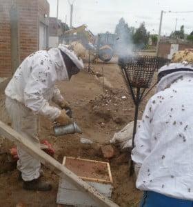 Descubrieron cerca de 10 mil abejas en un canasto de basura