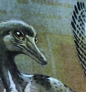 """Presentaron a """"Alnashetri cerropoliciensis"""", un dinosaurio de 95 millones de años"""