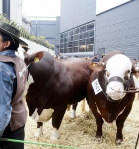 Comienzó la exposición Rural de Bahía Blanca