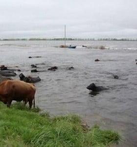 Las lluvias complican la inundación de campos bonaerenses