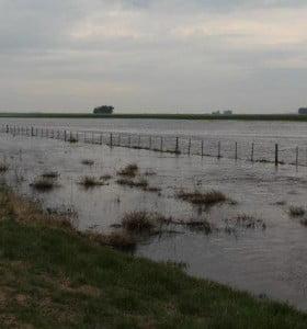Declaran a otros 16 distritos en emergencia agropecuaria