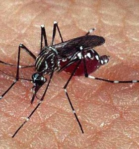 Paraguay sufre la mayor epidemia de dengue de su historia