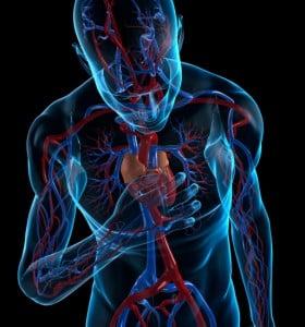 Las enfermedades cardiovasculares son la principal causa de muerte en el mundo