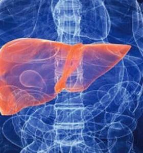 Científicos japoneses crearon un hígado humano con células madre