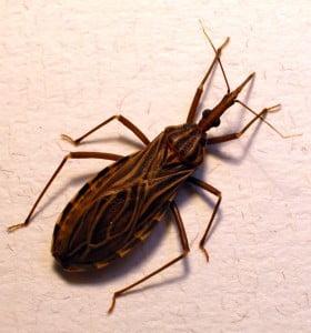 Un millón y medio de argentinos padece la Enfermedad de Chagas