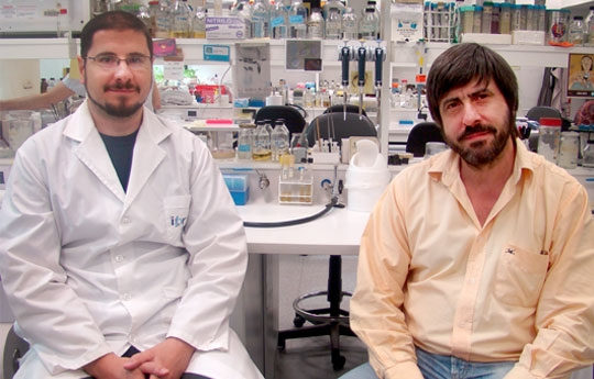 Hallan proteína capaz de convertir colesterol en provitamina D