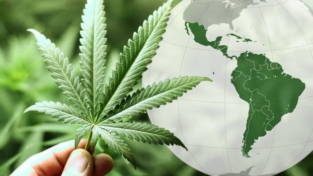 Marihuana: la Argentina y Chile seguirían los pasos de Uruguay