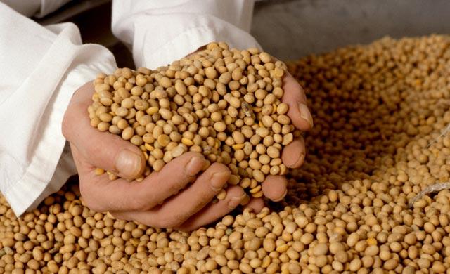 Argentina es el tercer productor mundial de semillas oleaginosas