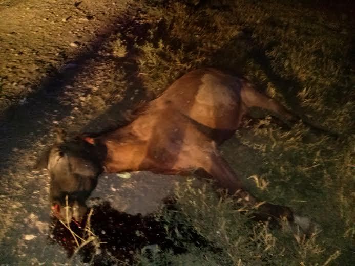 Un caballo murió al ser atropellado en Ruta 3 y Belisario Roldan