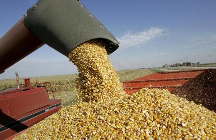 """""""No hay ningún proyecto"""" para intervenir en el comercio de granos"""