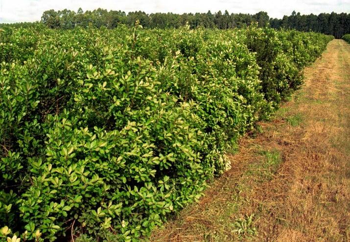Capitanich se reunió con el sector yerbatero y hortícola
