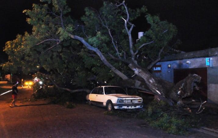 Árboles y postes caídos por la tormenta