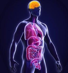Efectos del alcohol sobre nuestros órganos