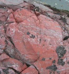 Un fósil que puede cambiar la historia oficial de la vida en la Tierra