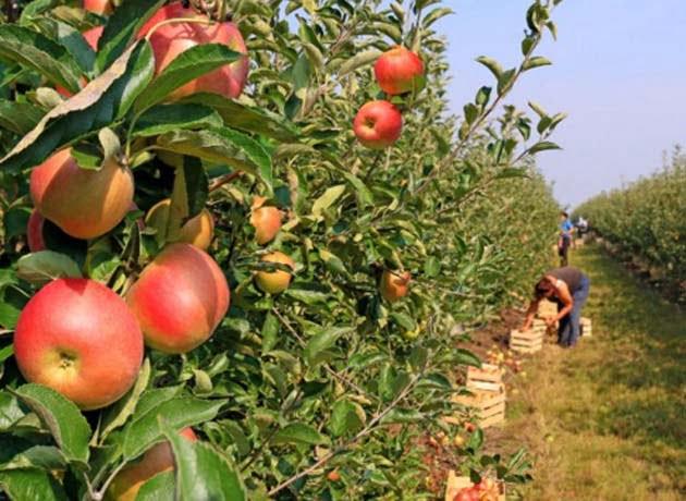 Otra frutícola empezó a bajar sus persianas y temen por sus empleados