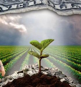 """El campo sigue """"embuchado"""" de dólares"""