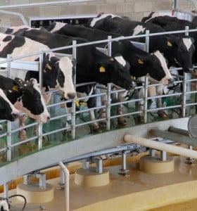 Emergencia lechera: Habrá un nuevo recorte de la producción en la provincia de Buenos Aires