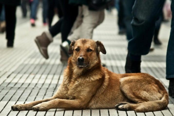 Cruel: quiere instalar frigoríficos y vender carne de perro