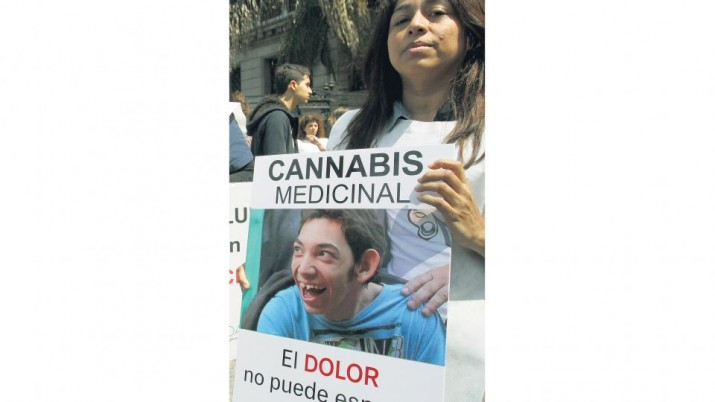 Autorizan el cultivo de cannabis medicinal