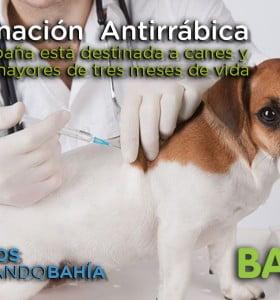 Campaña de vacunación antirrábica en el barrio Sesquicentenario