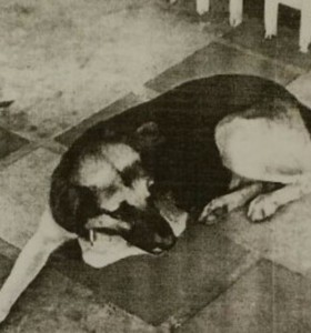 Misiones: un juez ordenó detener a un perro