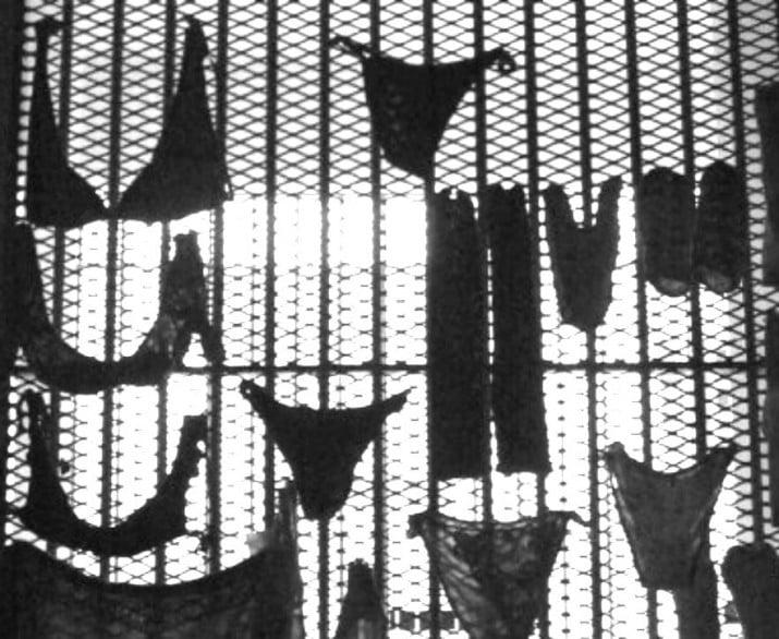 Cárceles de mujeres: adentro se replica la violencia de afuera