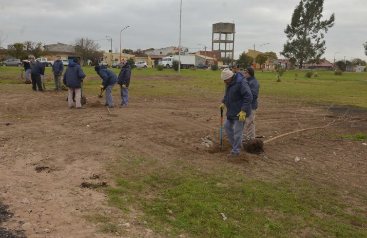 Programa de forestación de espacios públicos