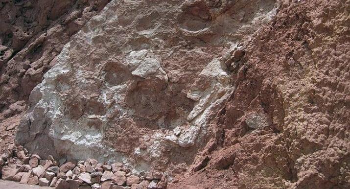Encontraron en San Juan restos de un dinosaurio gigante