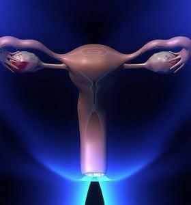 Un paso prometedor para la creación de ovarios artificiales