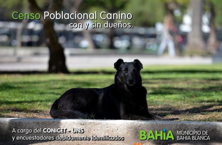 Se realizará en la ciudad un Censo Poblacional Canino