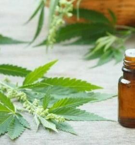 El Garrahan realiza ensayos con aceite de cannabis