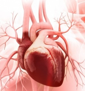 Las 10 curiosidades sobre el corazón que desconocías
