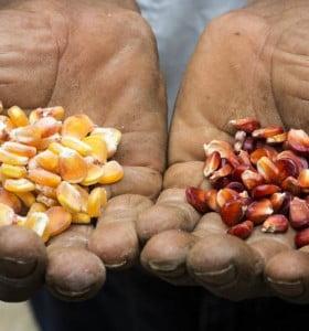 Polémica en Misiones porque el macrismo pretende desarrollar cultivos transgénicos