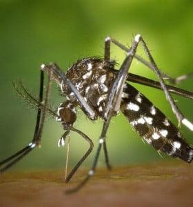 Recomiendan proteger a niños de las picaduras de mosquitos