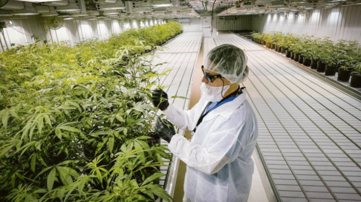 Industria del cannabis: Argentina bajo la lupa