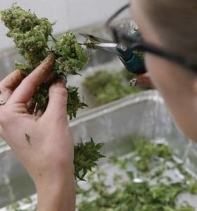 10 usos terapéuticos de la Marihuana