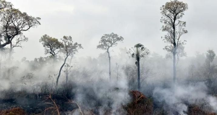 Recuperar el ecosistema del Amazonas llevará entre 200 y 500 años