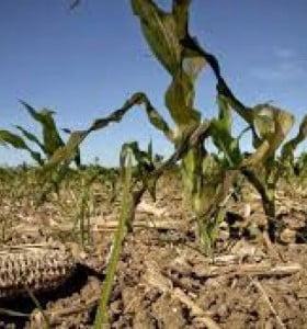 Declaran la Emergencia Agropecuaria en distritos de la Sexta Sección