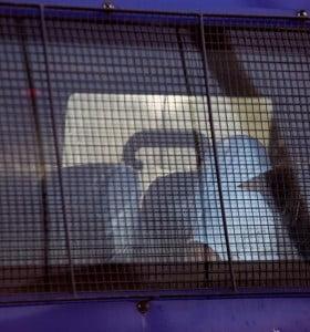 Harán pruebas de ADN, rastros, y pericias faciales a los rugbiers detenidos