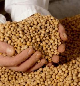 """Investigadores platenses elaboran """"snack saludable"""" a base de soja"""
