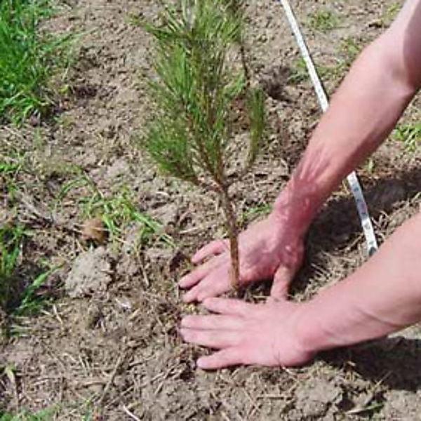 Las escuelas bonaerenses tendrán un jardín botánico de especies nativas