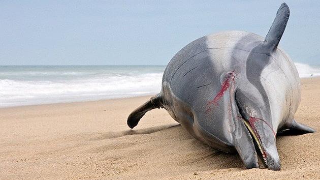 El número de delfines muertos en la costa de EE.UU. bate récords