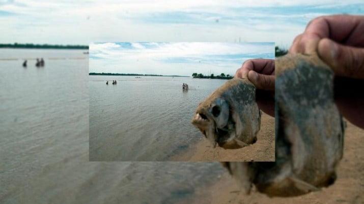 Invasión de pirañas en el río Paraná dejó 60 heridos y una nena amputada