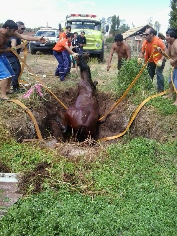 Rescataron a un caballo atrapado en un pozo de 4 metros de profundidad
