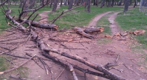 """""""El señor intendente no puede hacerse el que no estaba enterado del problema de los árboles"""""""