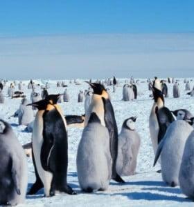 ¿Hay wifi en la Antártida?