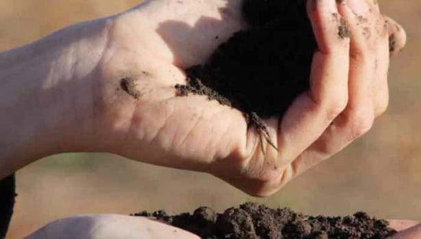 """Citricultores se congregan bajo el lema de """"produccion sustentable"""""""
